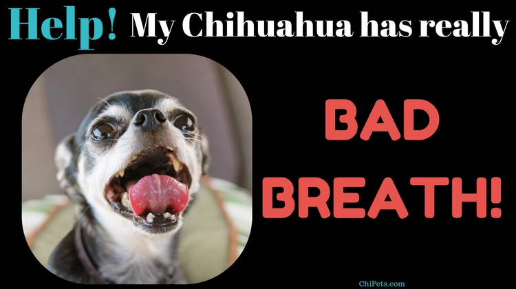 What Can I Do For Bad Breath In My Dog